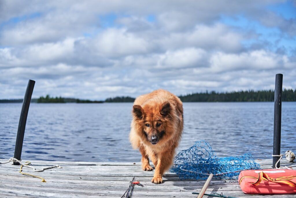 Do's & Don'ts When First Time Fishing with your Pet - Gold Beach Oregon